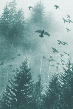 photo of birds and trees